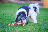 Bunbury Pet Photography - www.carienleephotography (1)