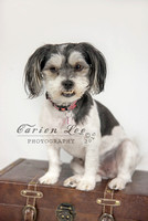 Bunbury Pet Photography - www.carienleephotography (4)